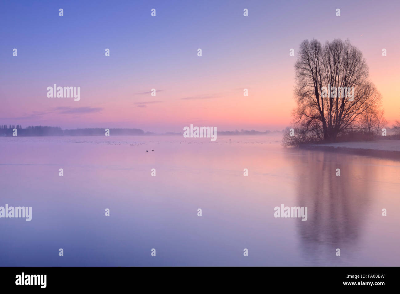 A tree on the edge of a lake, reflected in the water. Photographed on a cold winter's morning at sunrise in - Stock Image