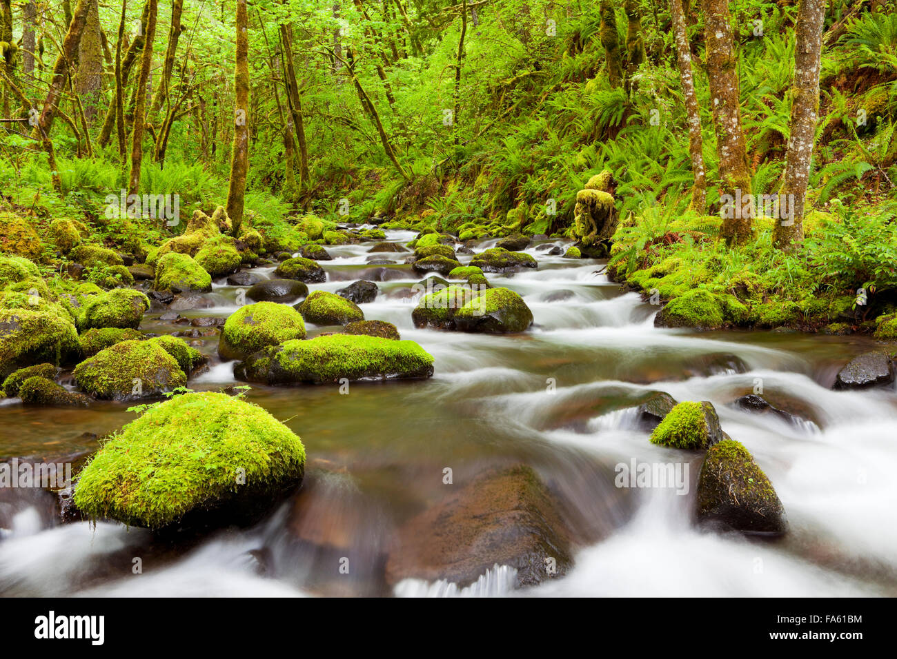 Gorton Creek through lush rainforest in the Columbia River Gorge, Oregon, USA. - Stock Image