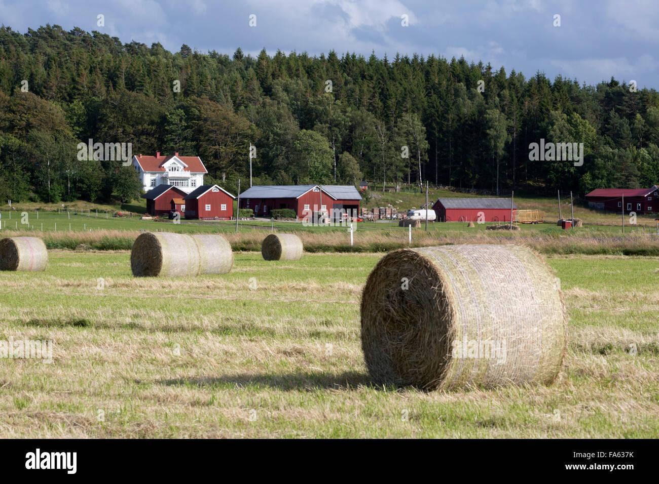 Typical Swedish farm with round hay bales, near Kode, Bohuslan, southwest Sweden, Sweden, Europe - Stock Image