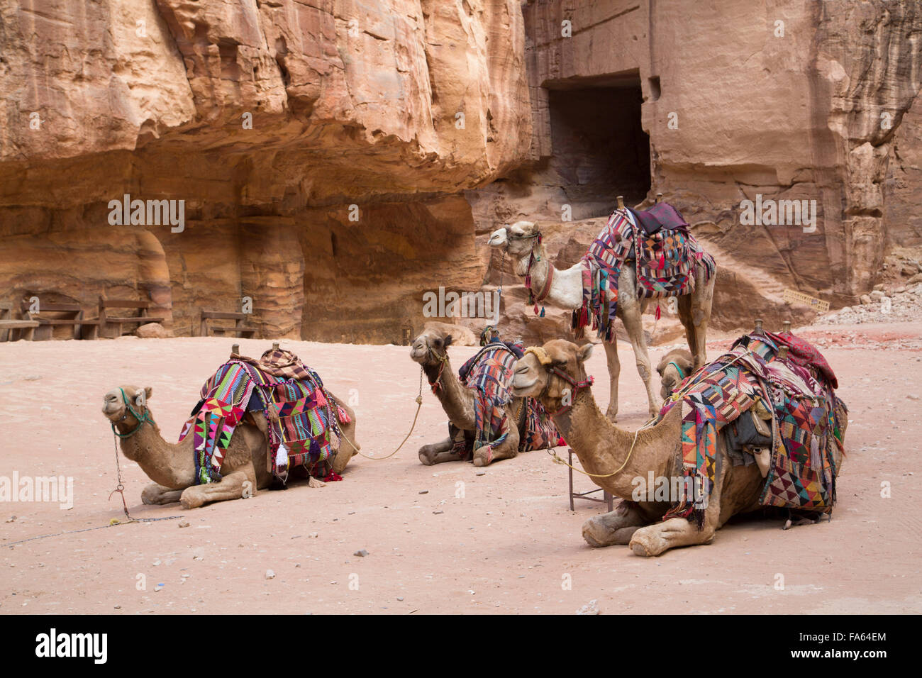 Camels in the Treasury Area, Petra, UNESCO World Heritage Site, Jordan - Stock Image
