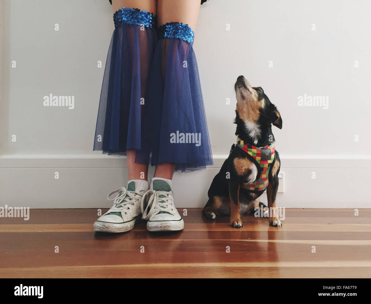 Low section of girl in a dance costume with her Chihuahua dog - Stock Image