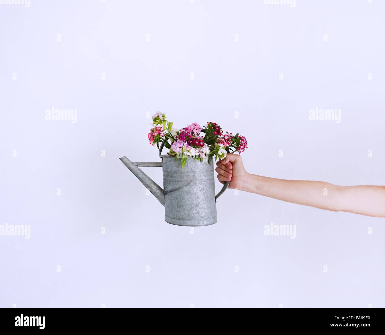Woman's hand holding Watering can with flowers Stock Photo