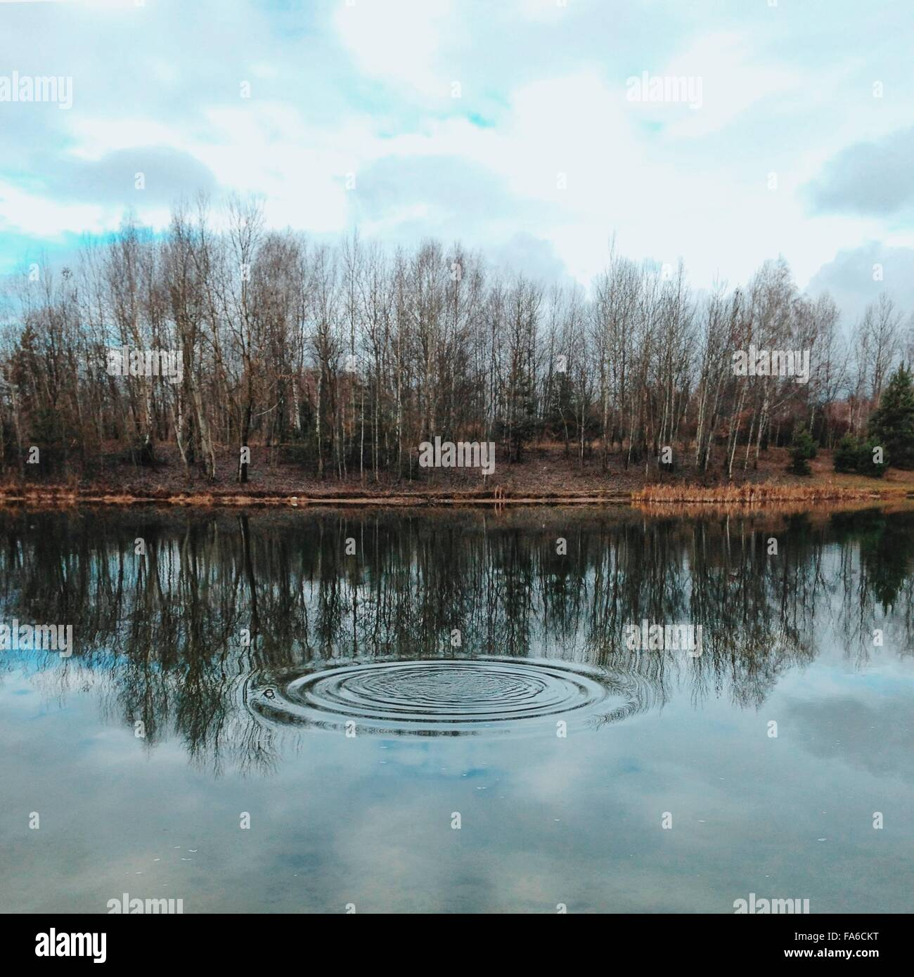 Concentric Water ripples in river - Stock Image