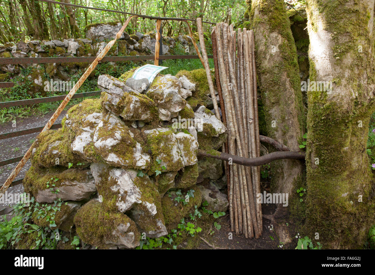 Hazel walking sticks stacked up and left for public use on the Mullaghmore loop walk, The Burren, Ireland - Stock Image