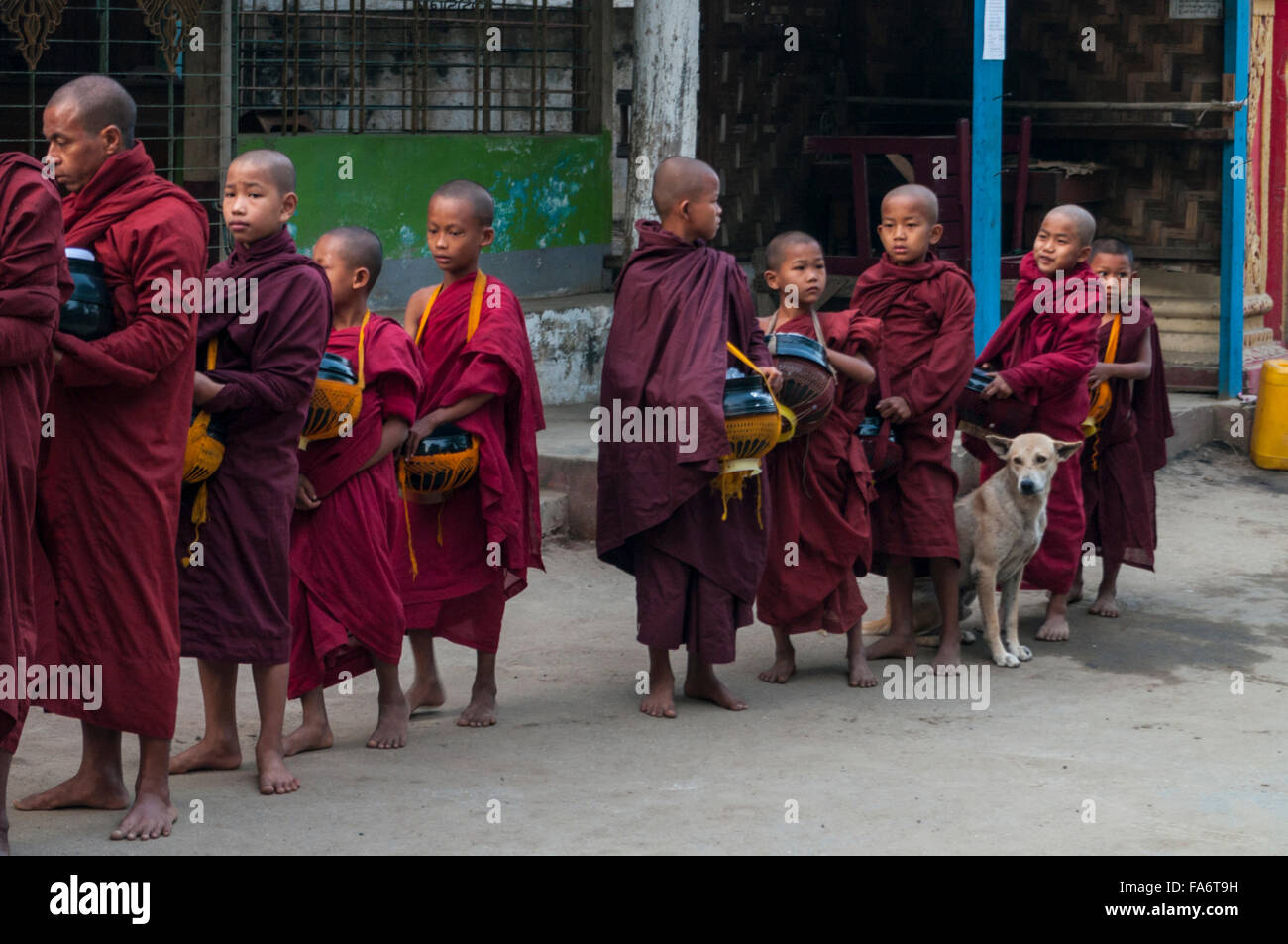 Group of juvenile Buddhist monks on alms round queuing up for food alms in Shwe Kyet Yet village, Mandalay Region, - Stock Image