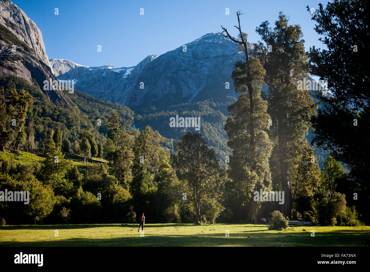 HIking into the primeval 4000 y.o. forests of Cochamó valley - accessible only by foot and surrounded by towering - Stock Image