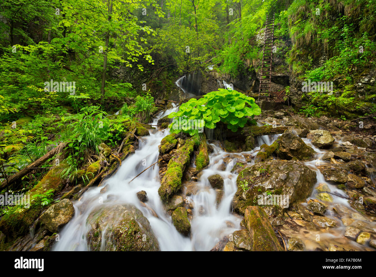 A waterfall in a lush gorge in Slovenský Raj in Slovakia. - Stock Image