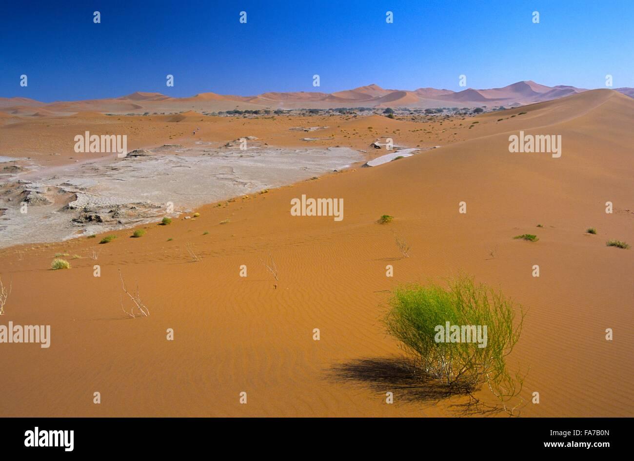 Namibia, Namib-Naukluft National park, Sossusvlei // Namibie, Namib-Naukluft National park, Sossusvlei - Stock Image