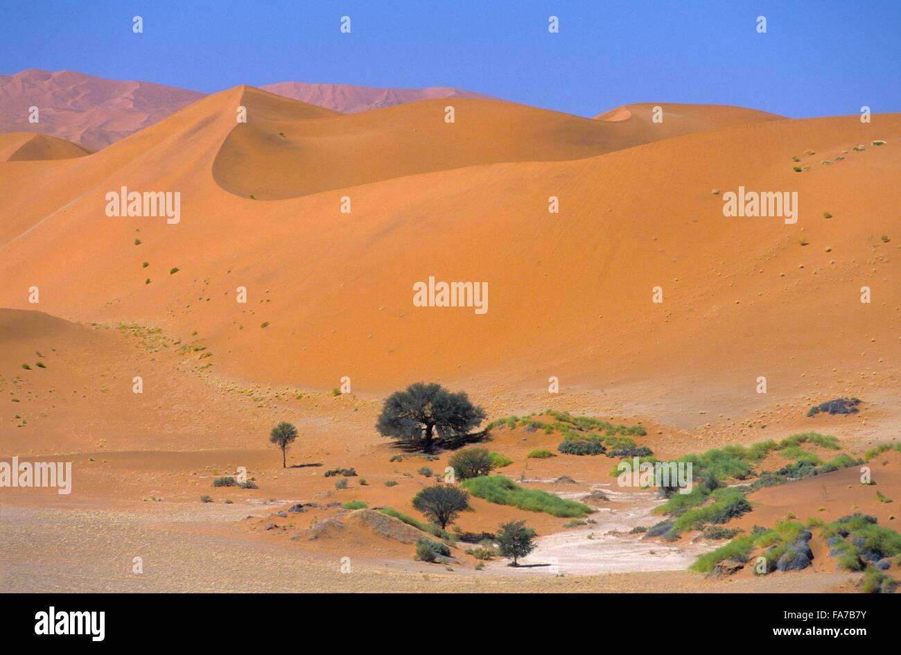 Namibia, Namib-Naukluft National park, Sossusvlei // Namibie, Namib-Naukluft National park, Sossusvlei Stock Photo