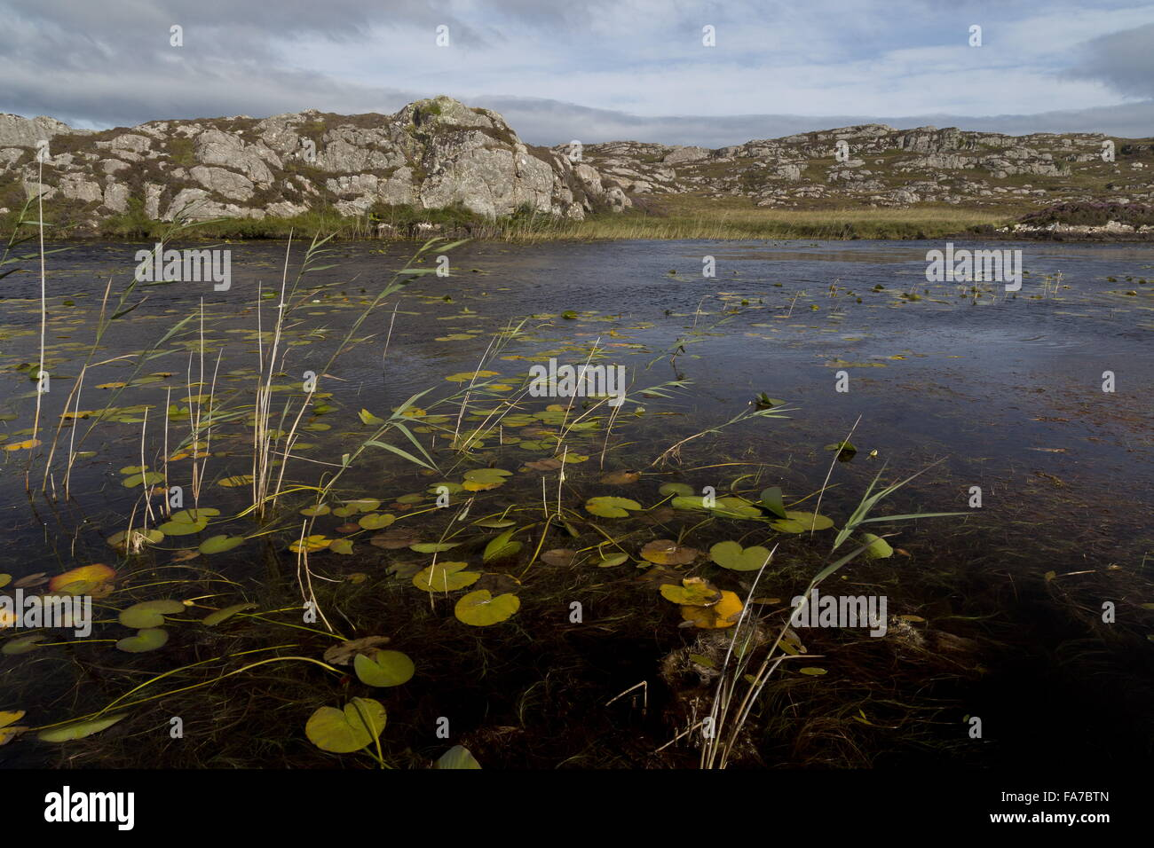 A remote clean unpolluted well-vegetated acidic loch, Loch a Mhill Aird, the island of Coll, Inner Hebrides, Scotland. - Stock Image