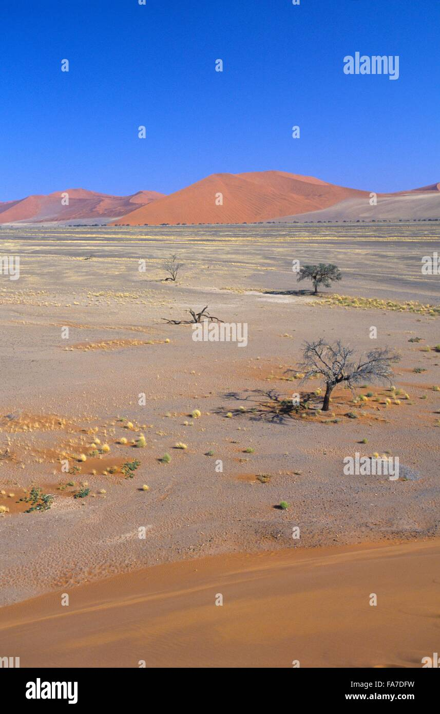 Namibia, Namib-Naukluft National park, Sesriem, Dune 45, overview from top  // Namibie, Namib-Naukluft National - Stock Image