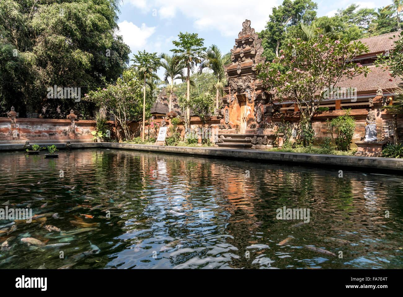 fish pond at the Hindu water temple Tirta Empul near Ubud, Bali, Indonesia - Stock Image
