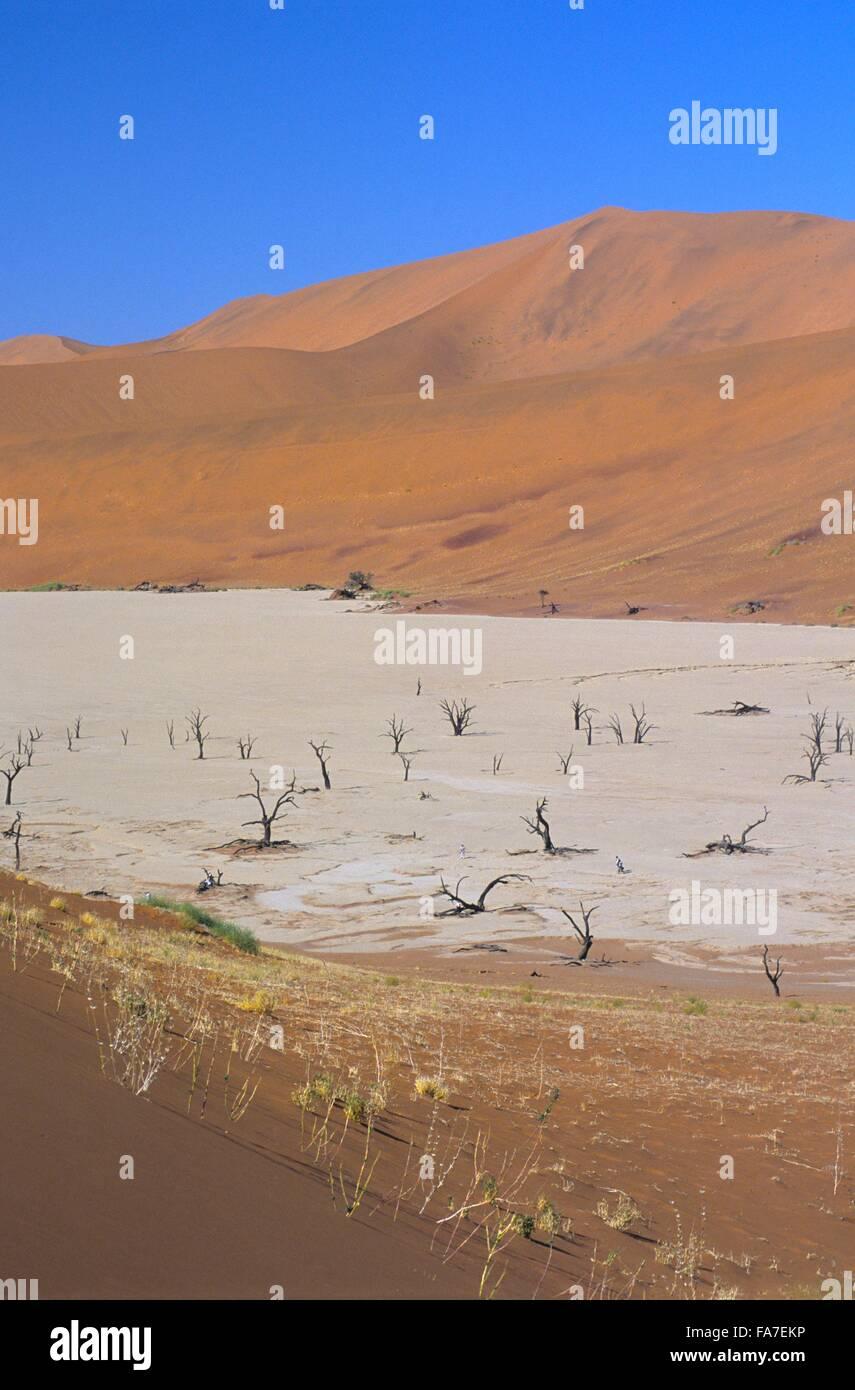 Namibia, Namib-Naukluft National park, Sossusvlei, Dead vlei // Namibie, Namib-Naukluft National park, Sossusvlei, Stock Photo