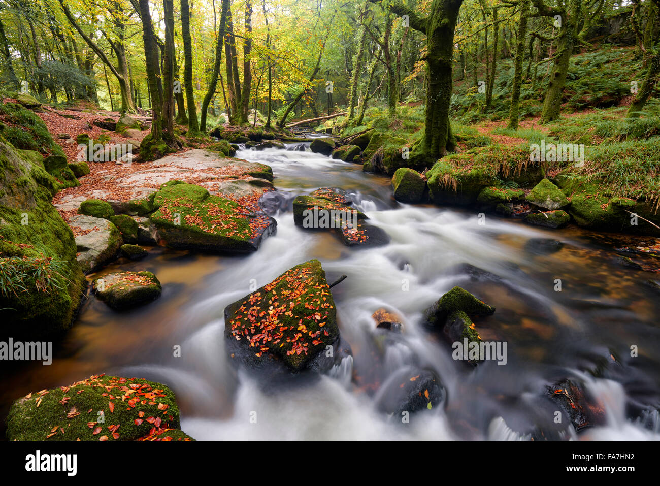 Early autumn along the banks of the River Fowey at Golitha Falls - Stock Image