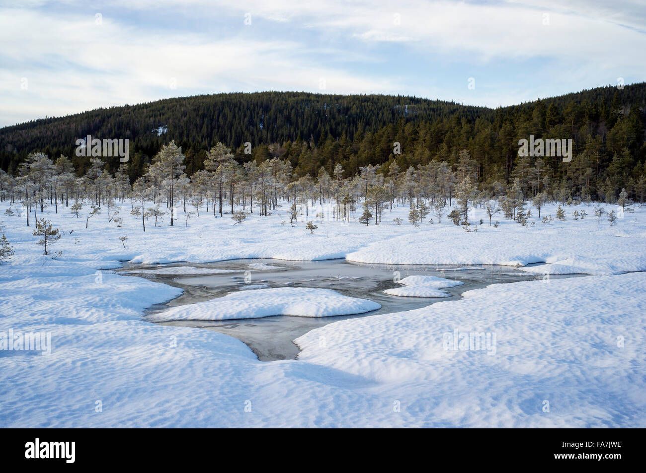 Mire in wintertime - Stock Image