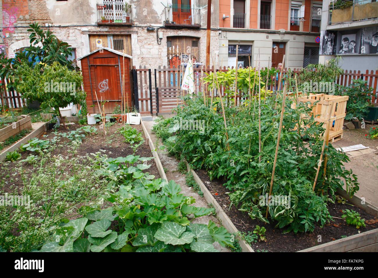 Urban Gardening, El Born, Barcelona, Spain, Europe - Stock Image
