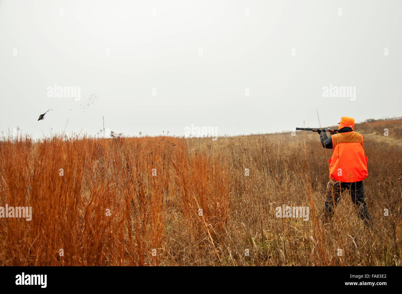 Boy stands in field shooting pheasant - Stock Image