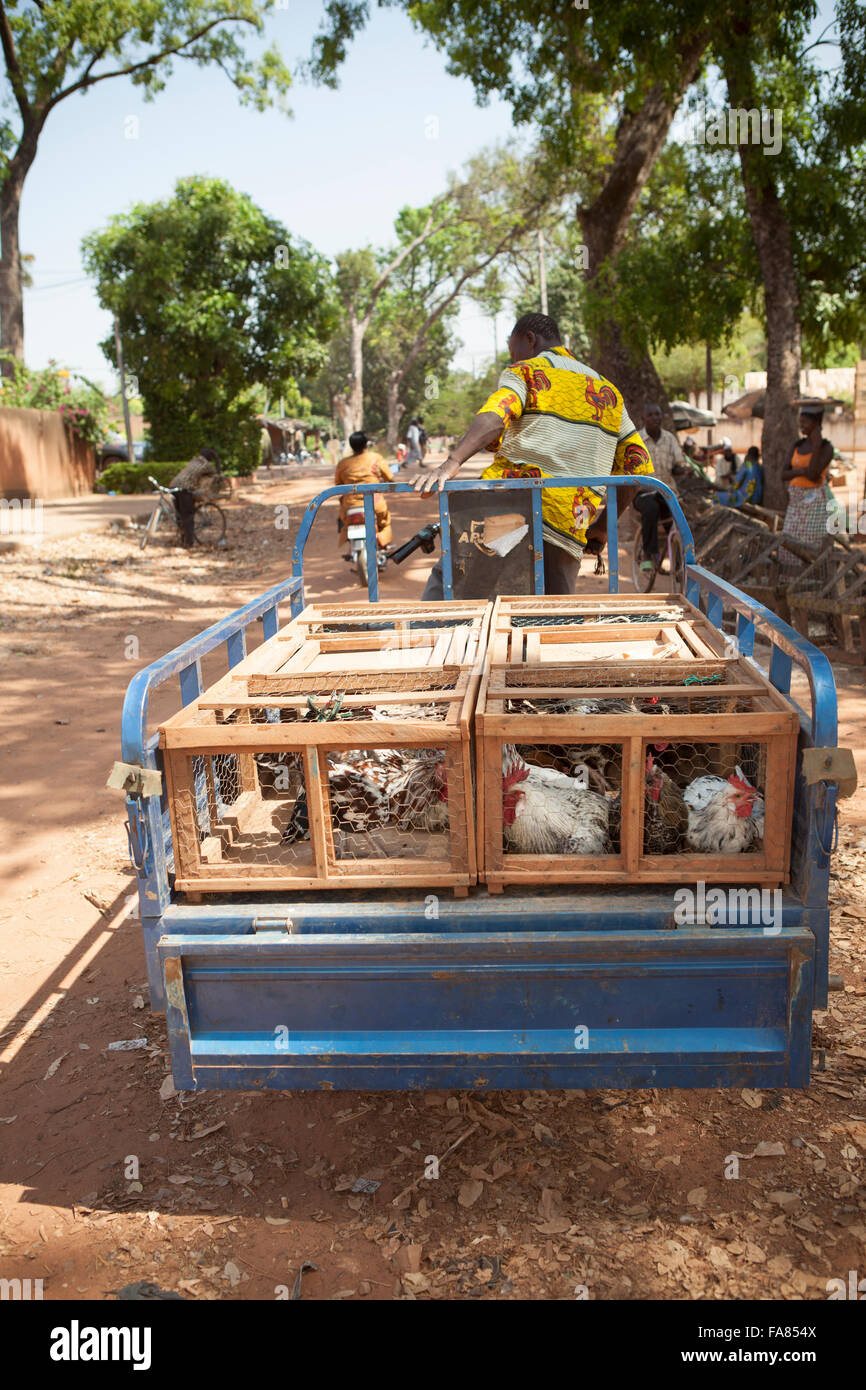 A vendor loads chickens onto his trailer at the poultry market in Banfora, Burkina Faso. Stock Photo