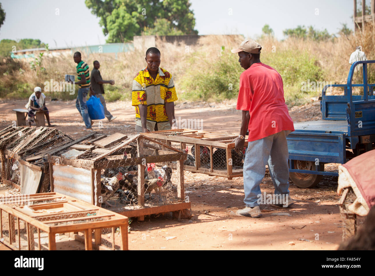 A vendor loads chickens onto his trailer at the poultry market in Banfora, Burkina Faso. - Stock Image