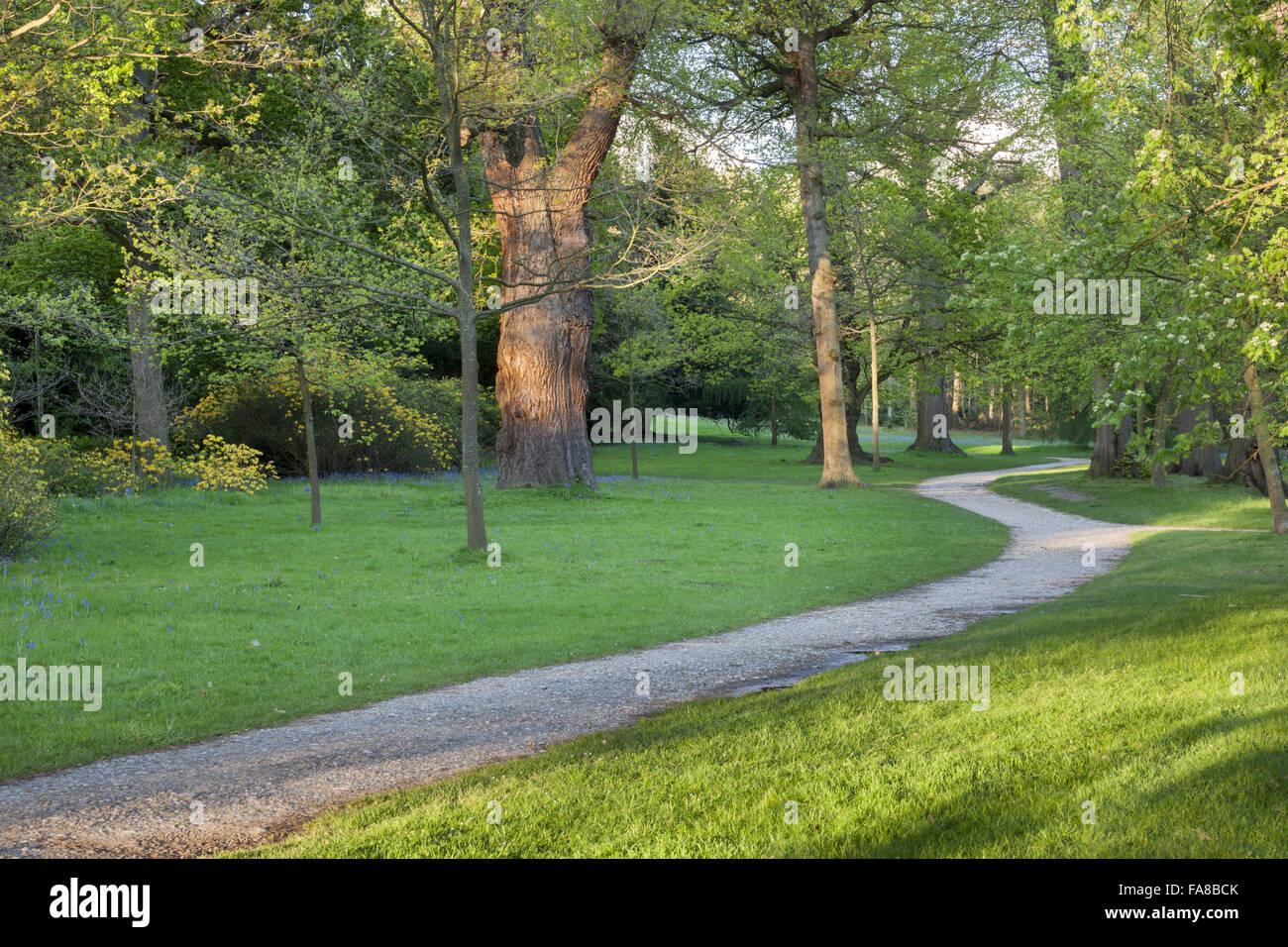 Woodland walk at claremont landscape garden surrey stock photo woodland walk at claremont landscape garden surrey workwithnaturefo
