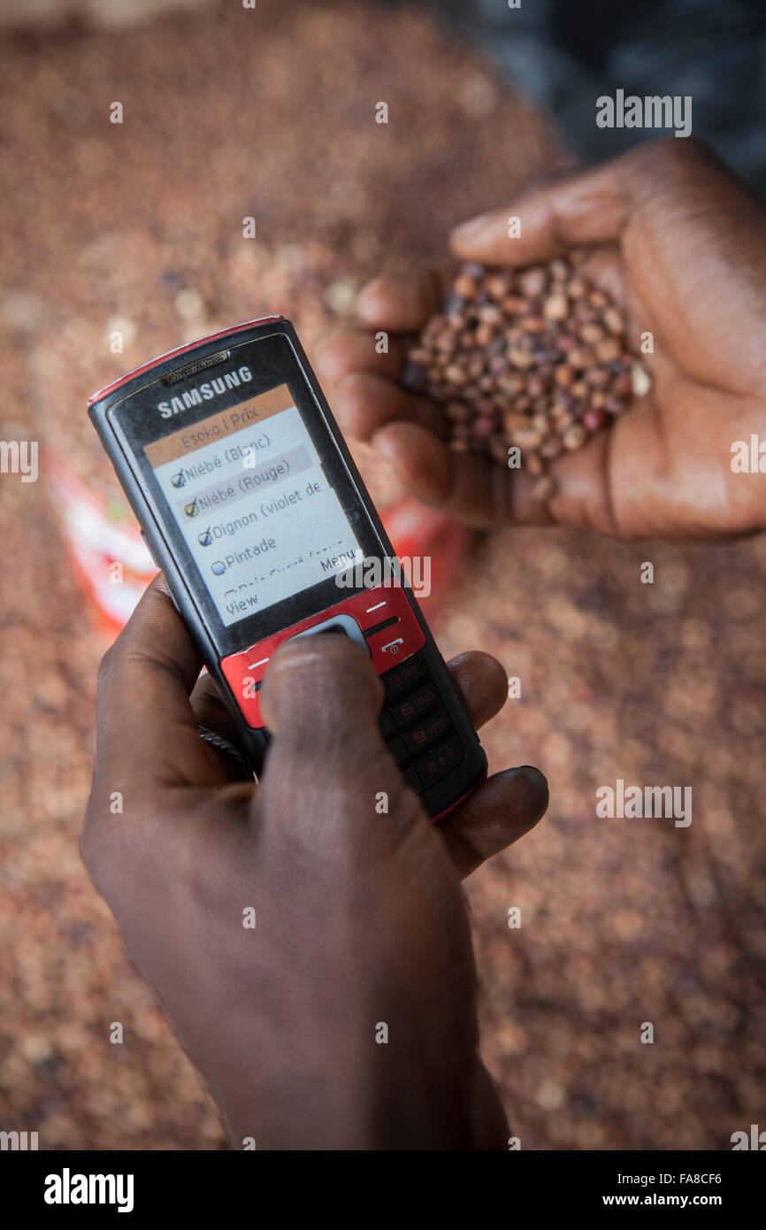 A commodities buyer uses mobile phone technology to compare prices at various markets  in Burkina Faso, W. Africa. - Stock Image