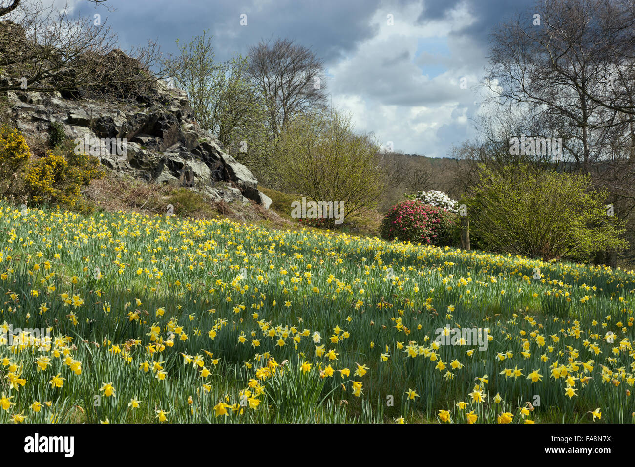 The rocky outcrop at Stoneywell, Leicestershire. - Stock Image