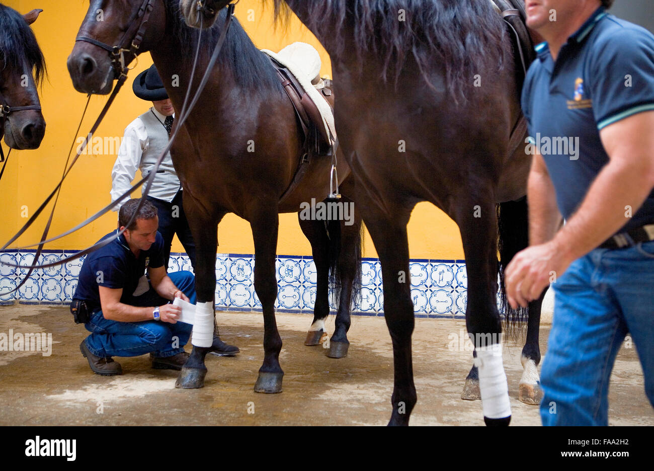 preparing the horse for the show in Royal Andalusian School of Equestrian Art. `Real Escuela Andaluza Del Arte Ecuestre´. - Stock Image