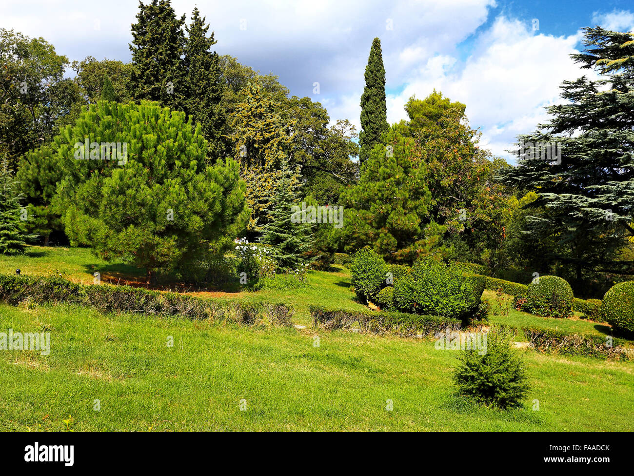 Trees, bushea, cypress trees  and other plants in the subtropical park - Stock Image