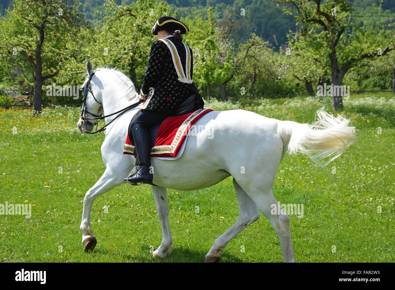 Women riding Andalusian horse - Stock Image