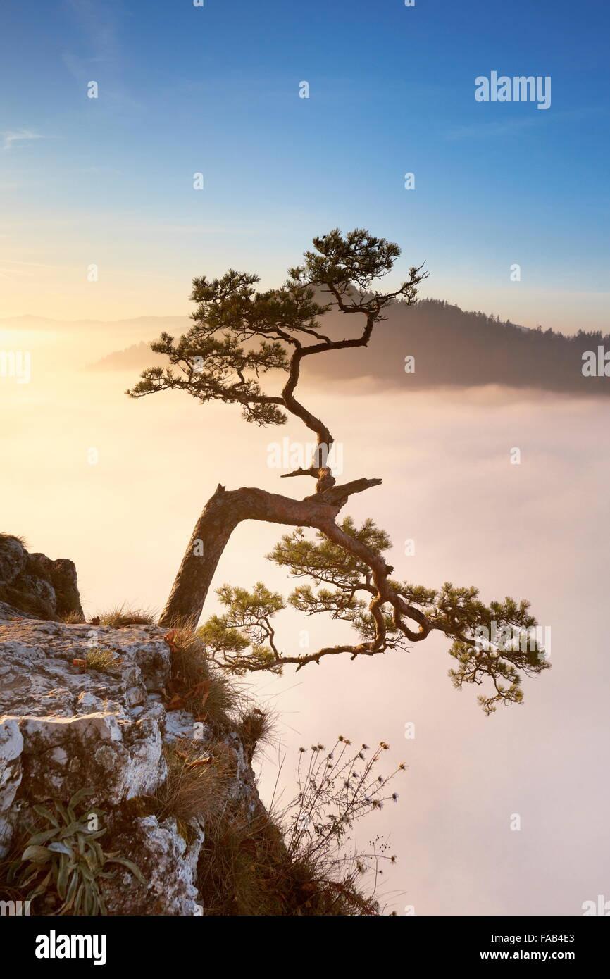 Alone tree at Pieniny Mountains, Poland - Stock Image