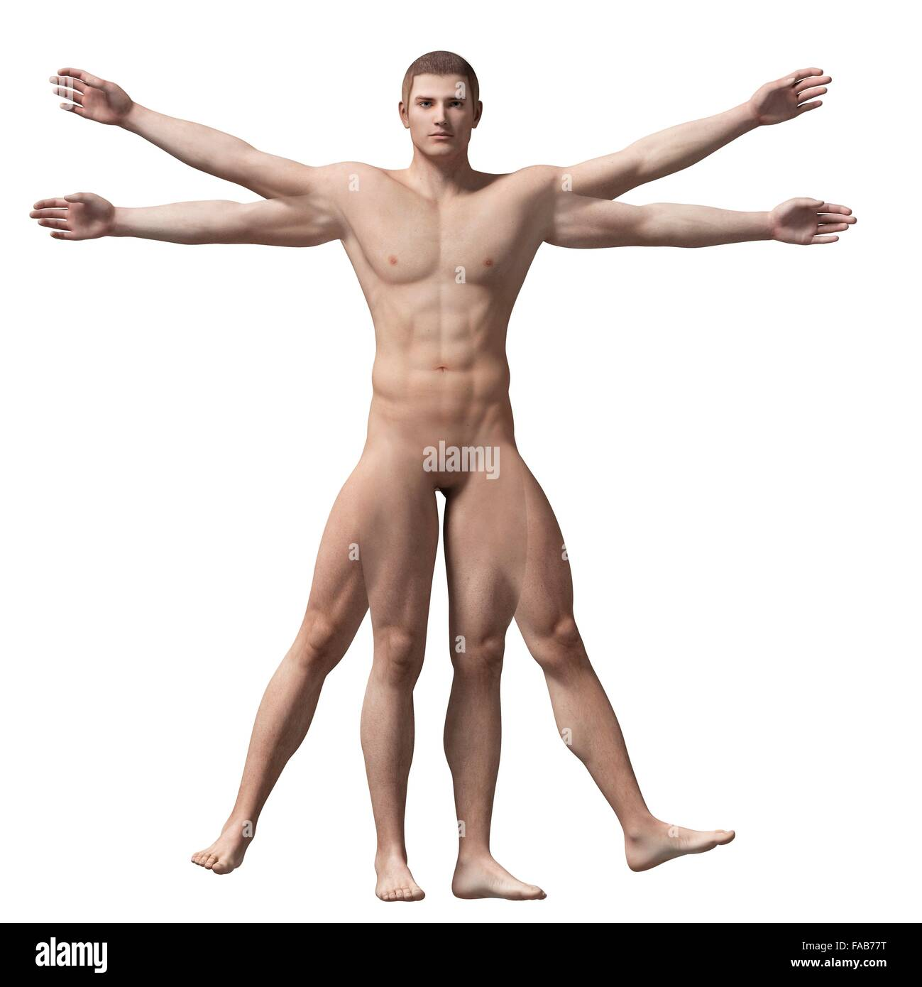 Vitruvian Man Anatomy Stock Photos & Vitruvian Man Anatomy Stock ...