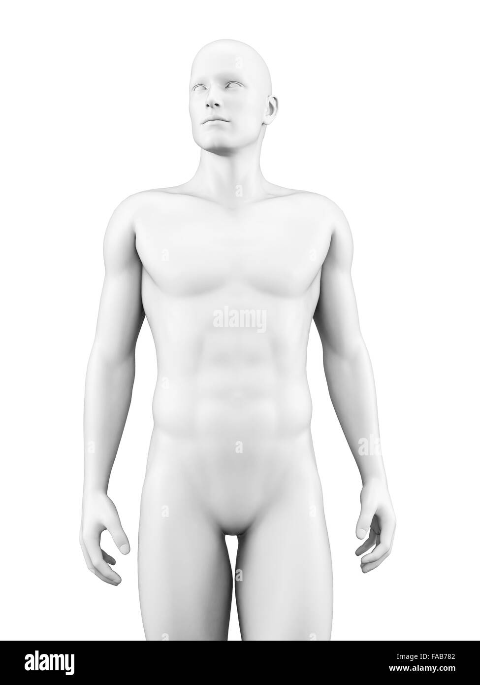 Human body, computer illustration. - Stock Image