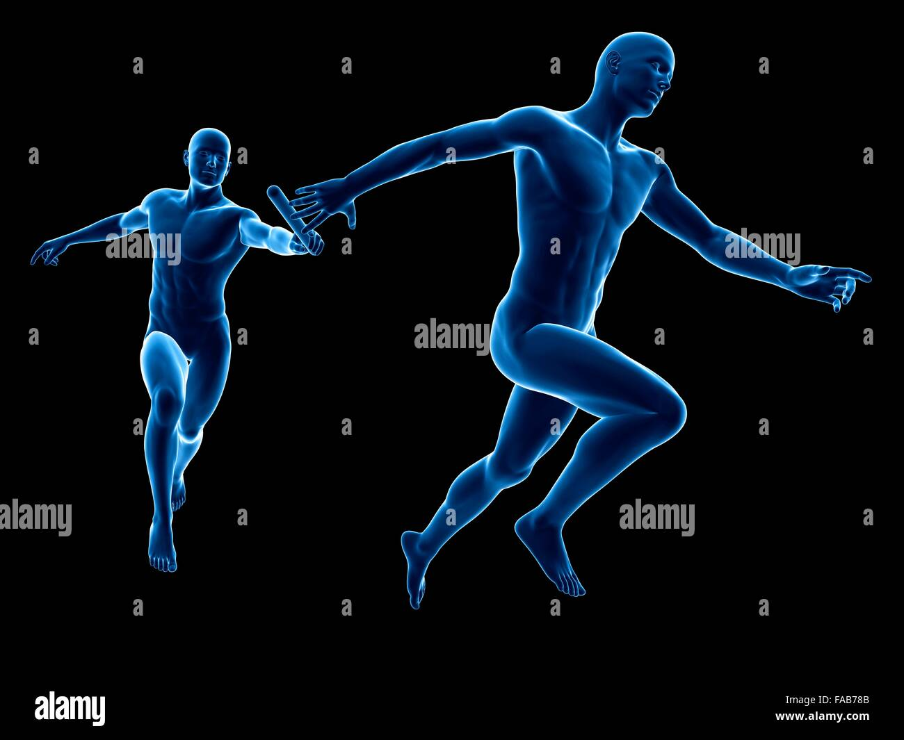 Anatomy Relay Race Runners Computer Stock Photos & Anatomy Relay ...