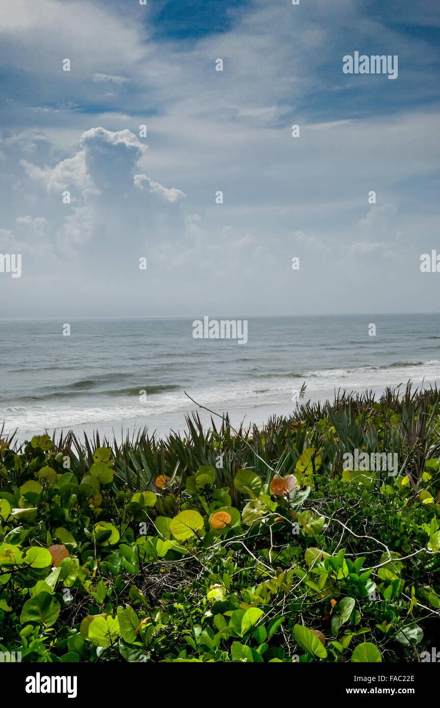Unspoiled east coast Merritt Island, Florida, USA vertical, Atlantic ocean view including surf, green coastal vegetation, - Stock Image