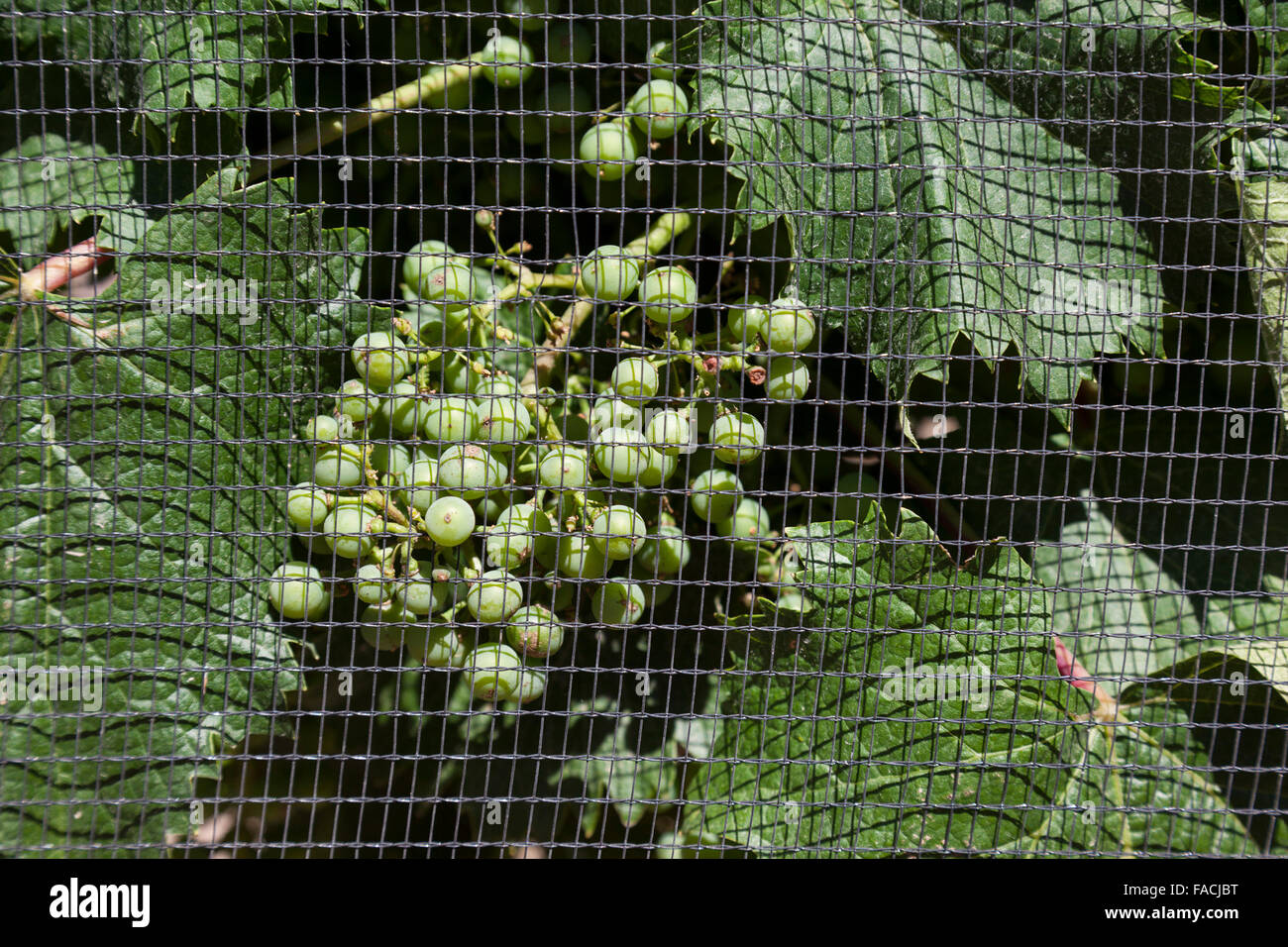 Hail Net Stock Photos Hail Net Stock Images Alamy