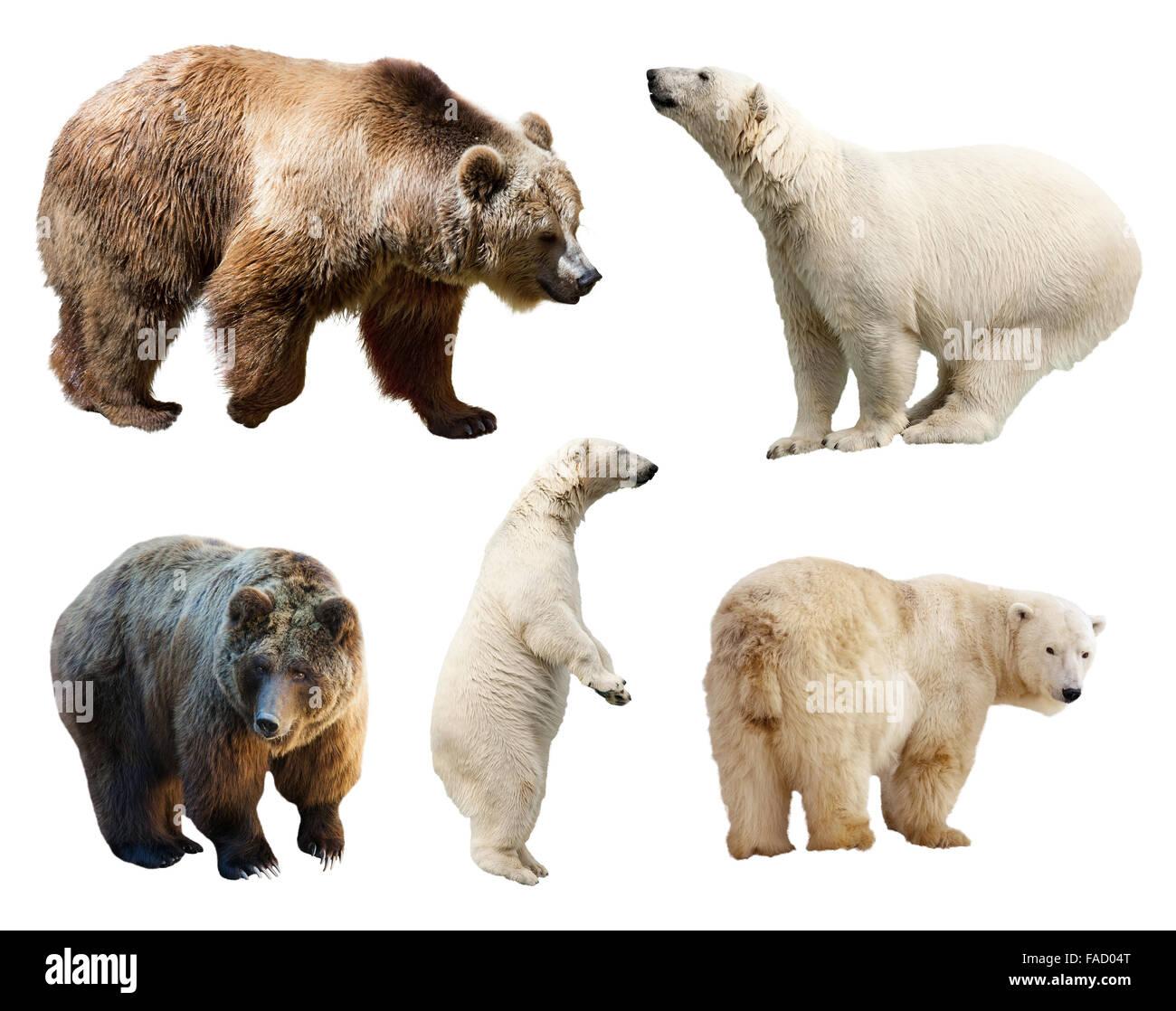 Set of bears. Isolated on white background - Stock Image