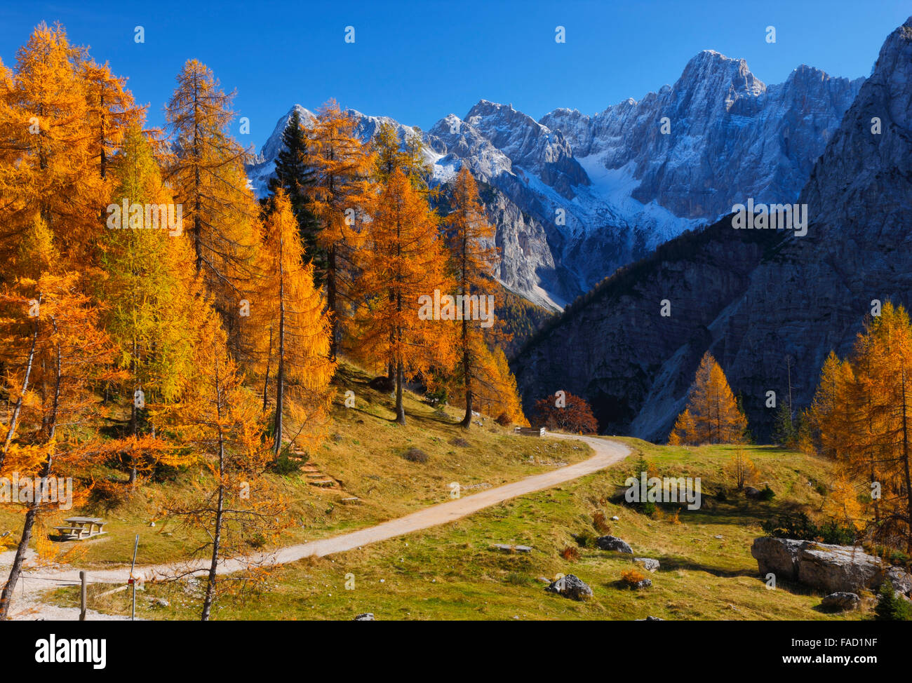 Colorful pine trees in autumn.Julian alps in Slovenia - Stock Image