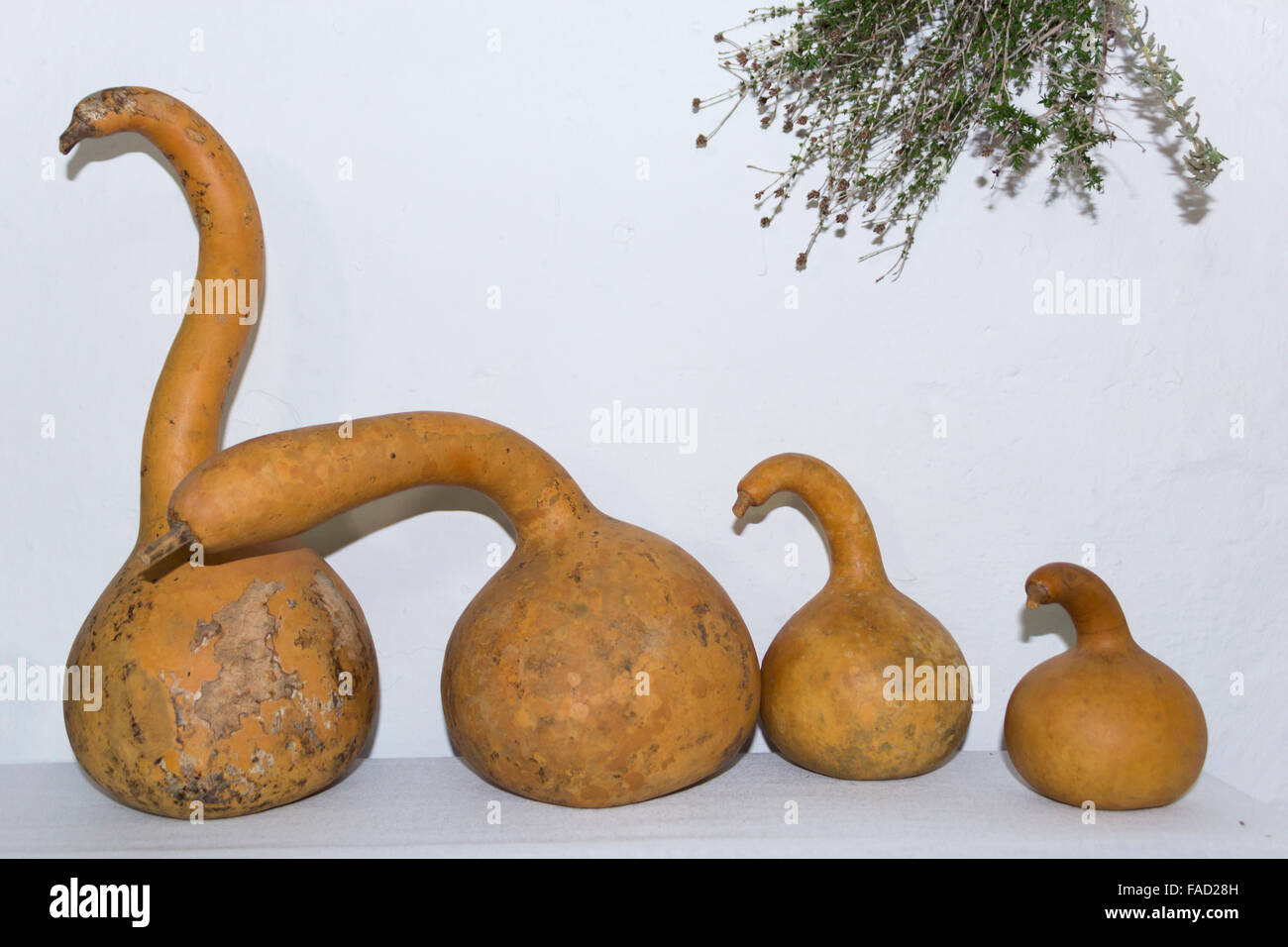 Oddly shaped pumpkins. - Stock Image