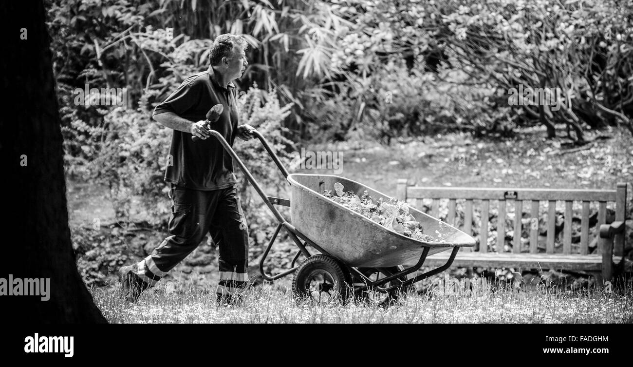 Gardener With Wheelbarrow in Town Gardens Swindon - Stock Image