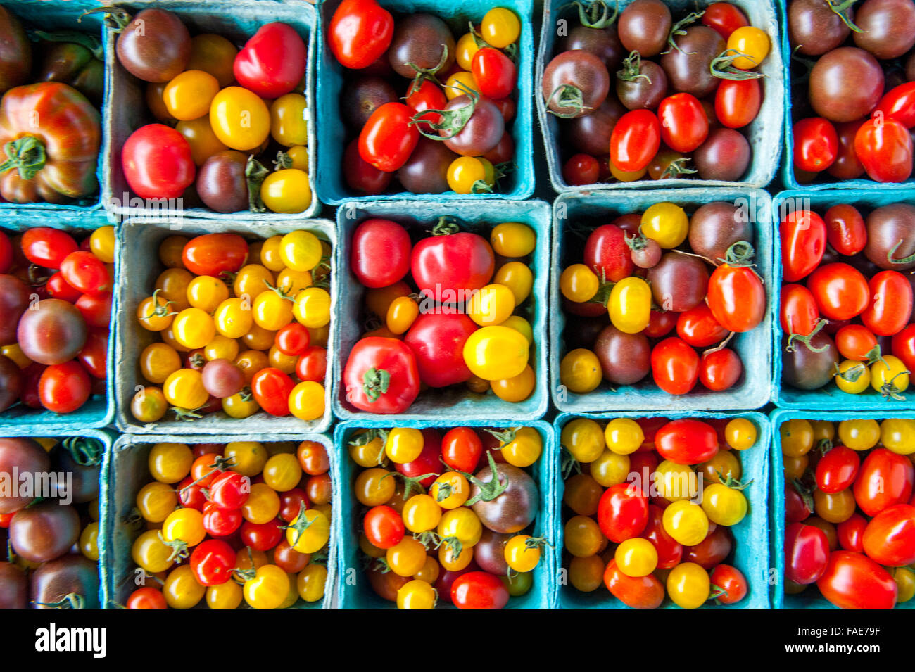 Containers of locally grown tomatoes - Stock Image
