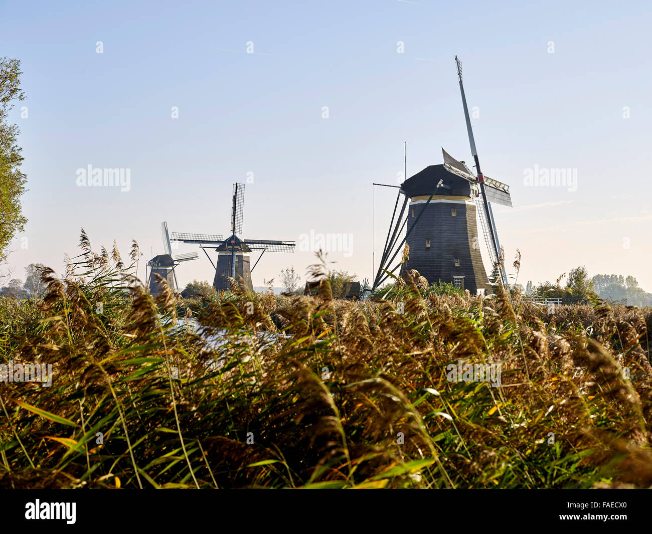 Dutch windmills in the polder near The Hague, Netherlands - Stock Image