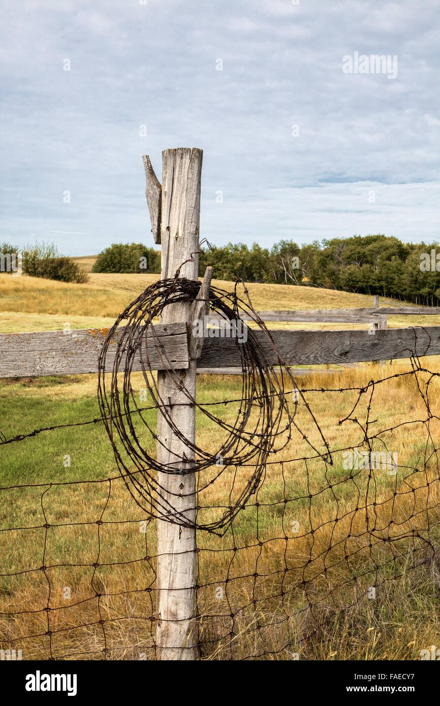 Barbwire hanging on an old fence post, old farm in Saskatchewan - Stock Image