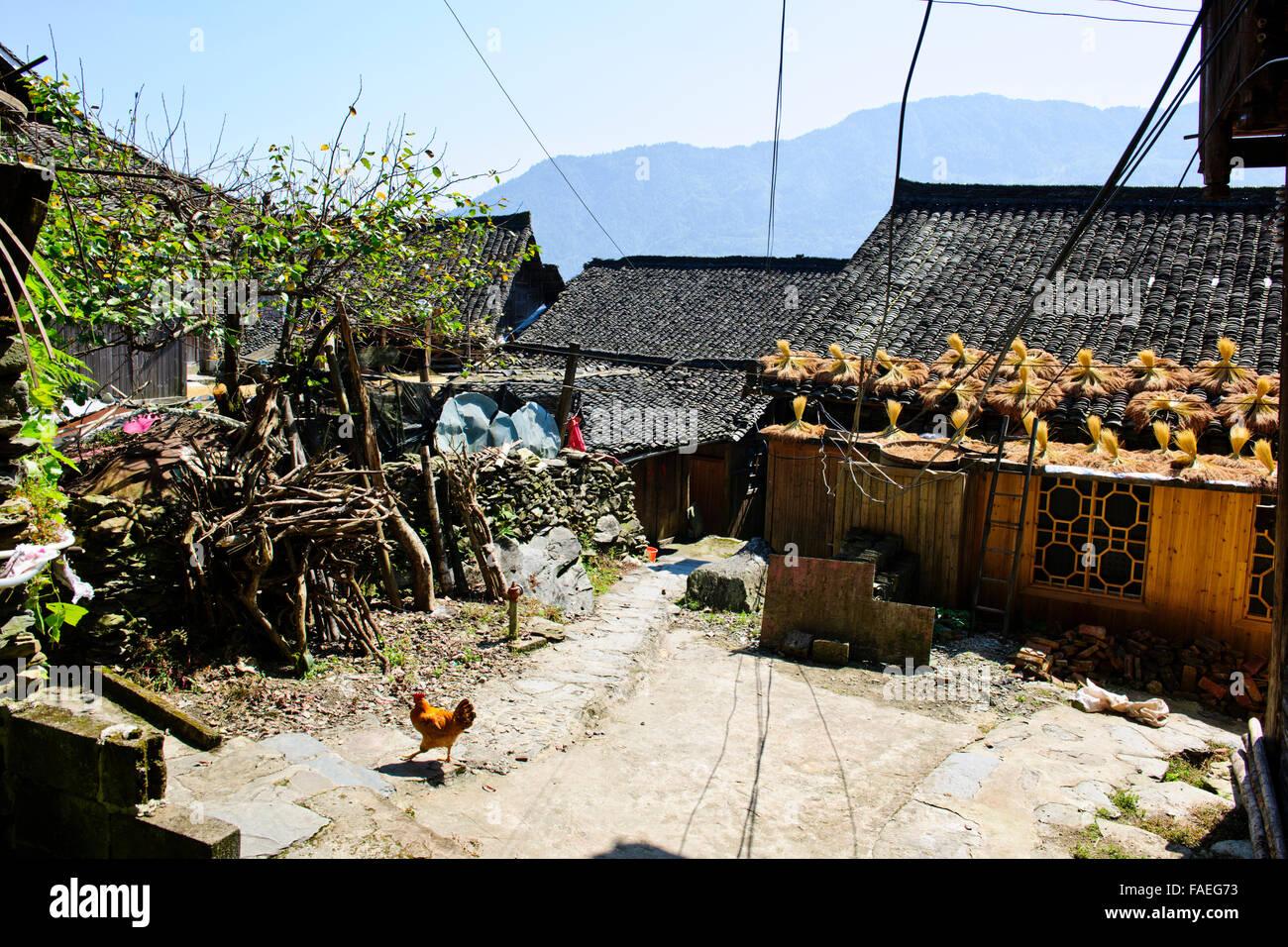Longji Rice Terraces,Dazhai Villages, Surrounding Area,Rice Crops,Zhuang and Yao Villages,Longsheng,Guangxi Province,PRC,People' Stock Photo