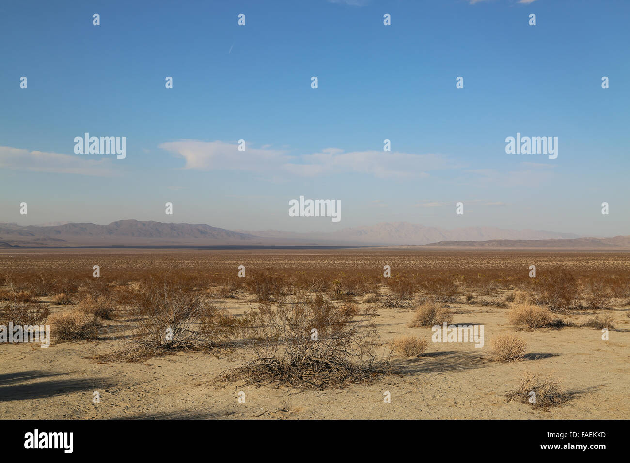 Brush and dry desert in Joshua Tree National Park, California. - Stock Image