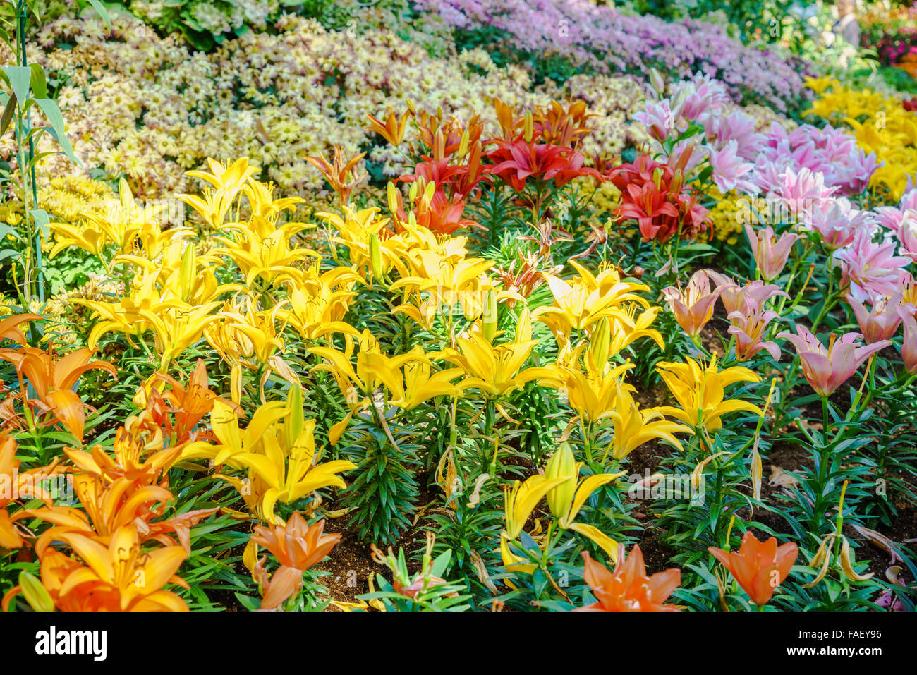 Kinds Of Flowers Stock Photos Kinds Of Flowers Stock Images Alamy