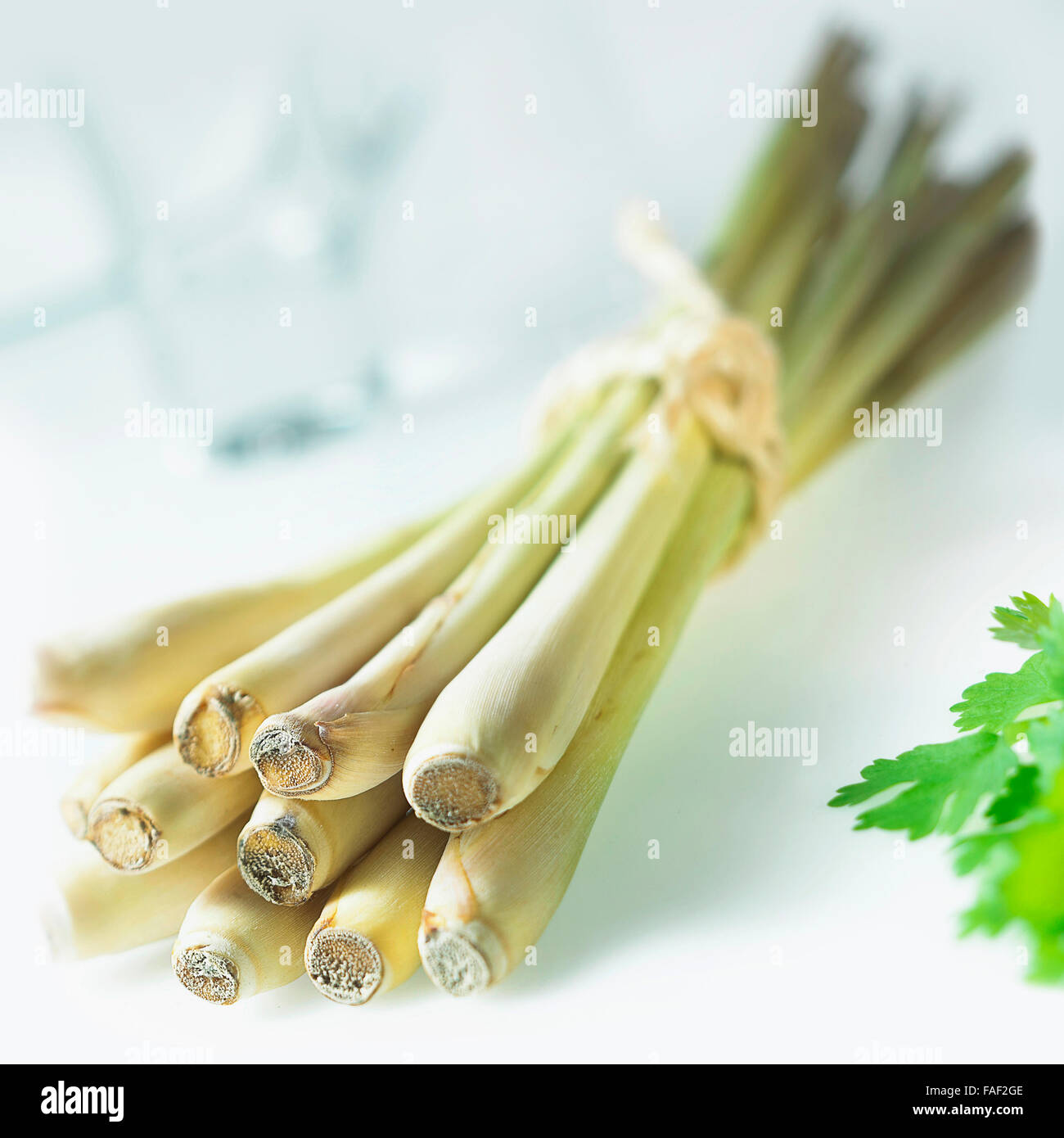 Bundle of fresh Lemon grass used for food seasoning and cooking. - Stock Image