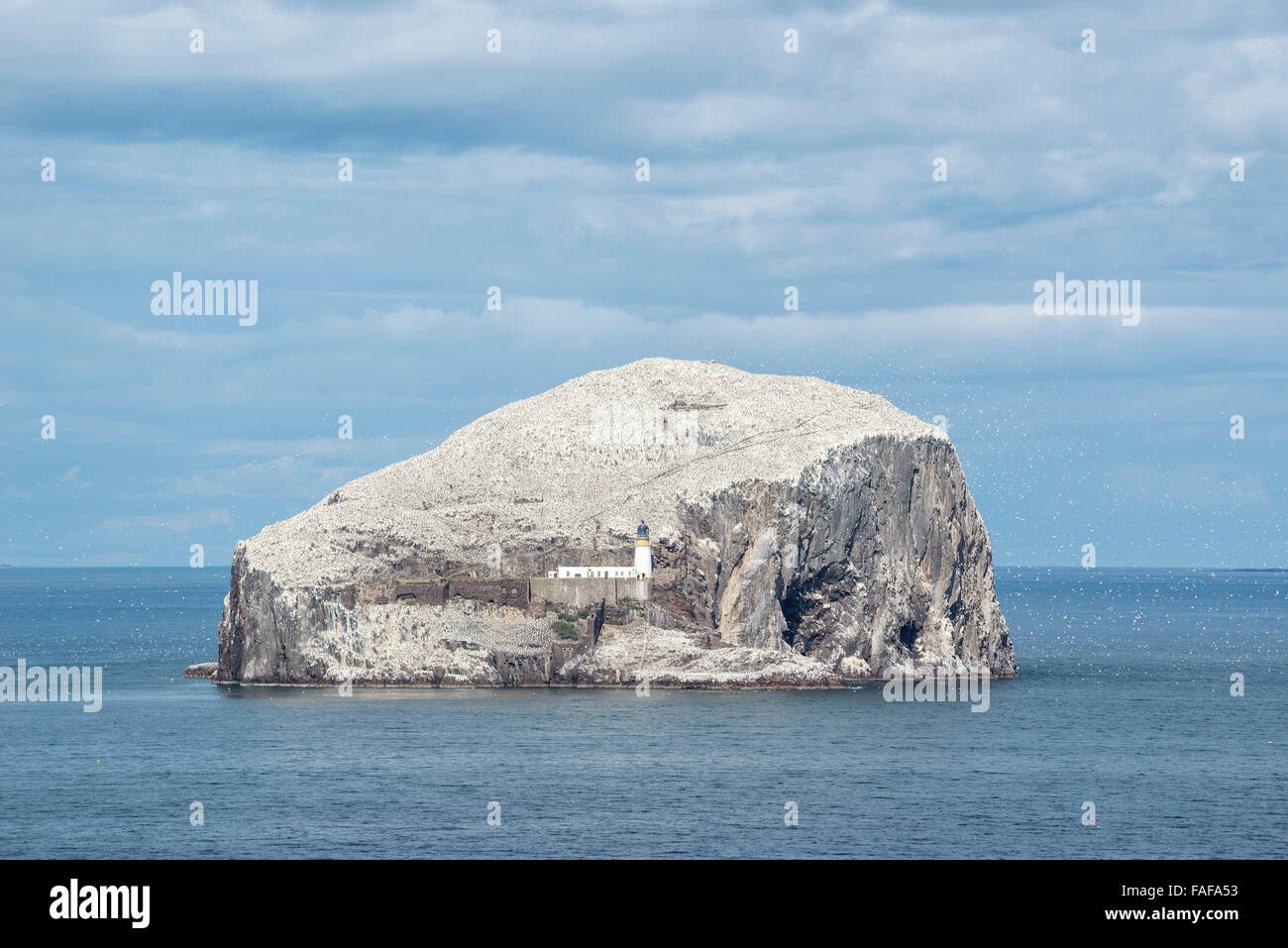 Bass Rock, volcanic rocks and gannet colony in the Firth of Forth at North Berwick, East Lothian, Scotland, United Stock Photo