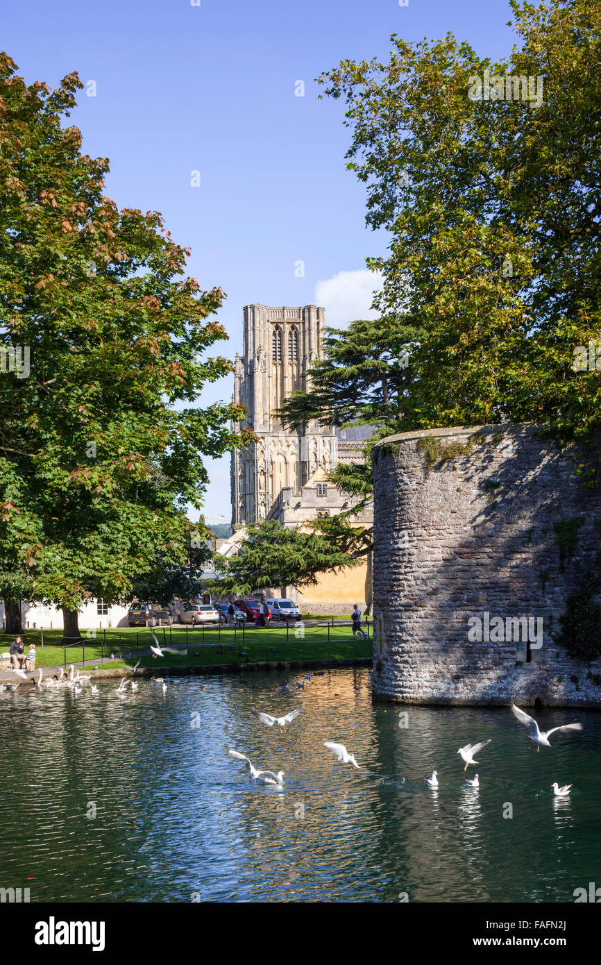 The 14th century moat surrounding the 13th century Bishops Palace in the cathedral city of Wells, Somerset UK - Stock Image