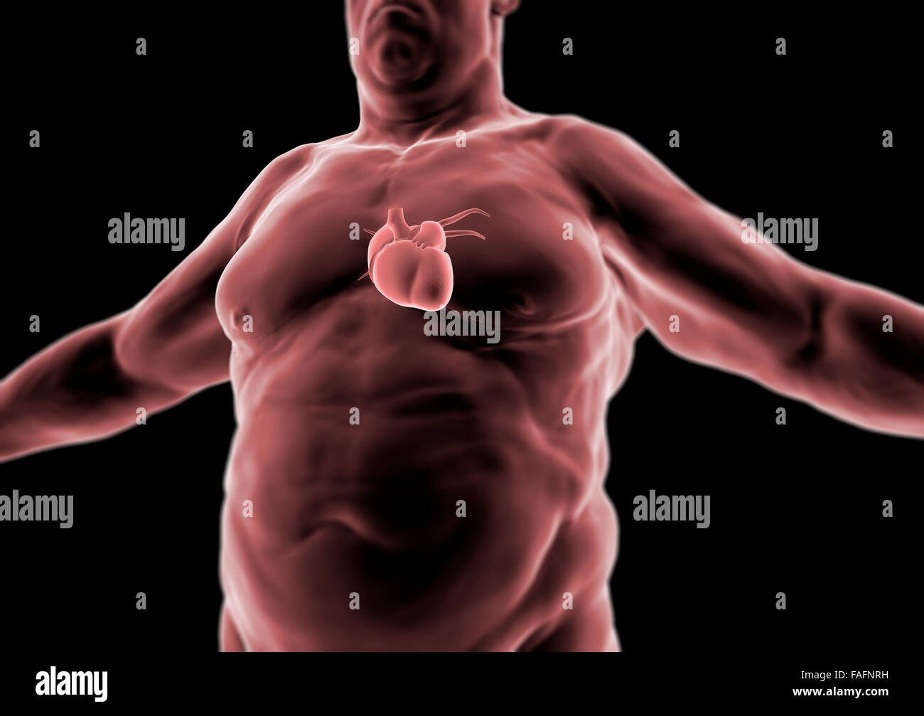 3d Human body, fat person, heart and anatomy, radiography Stock ...