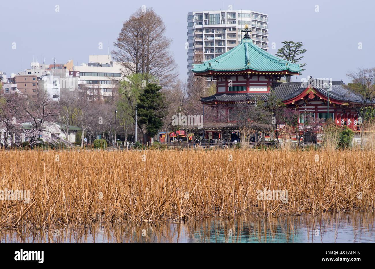 Bentendo with Shinobazu Pond at Ueno Park, Tokyo during cherry blossom season Stock Photo